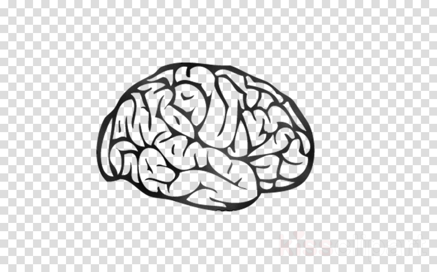 Brain, White, Head, transparent png image & clipart free download.