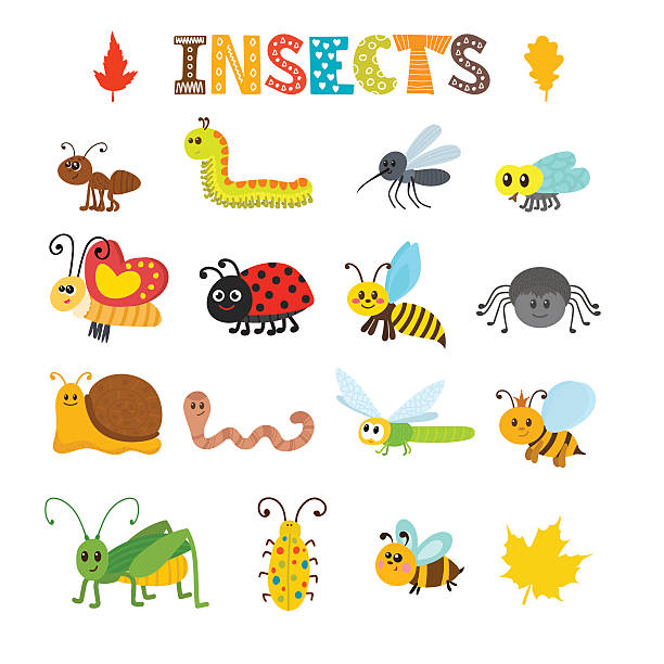 Best Bugs Illustrations, Royalty.