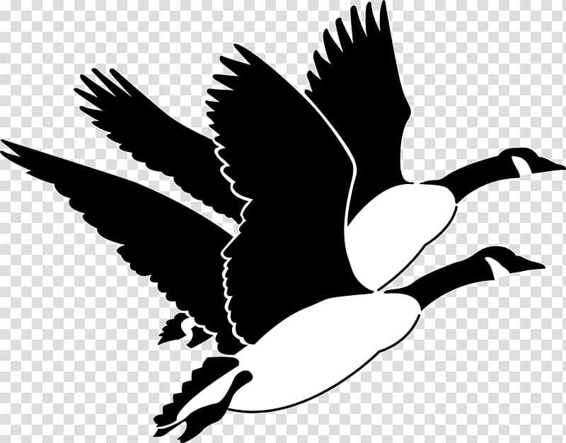Canada Goose Bird , goose transparent background PNG clipart.