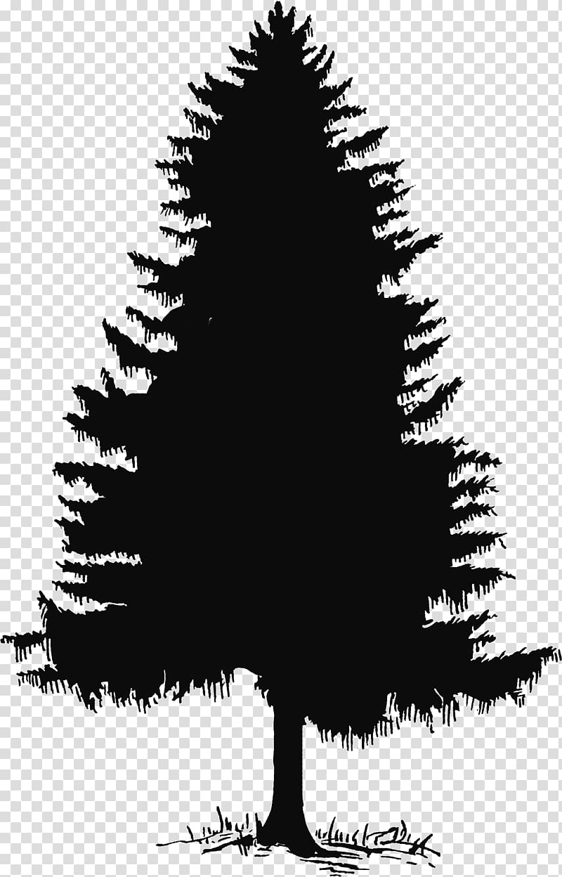 Evergreen Tree Pine Silhouette , Cedar Tree transparent background.