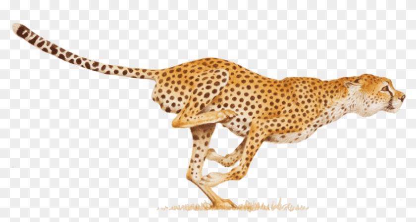 Claw Clipart Cheetah.