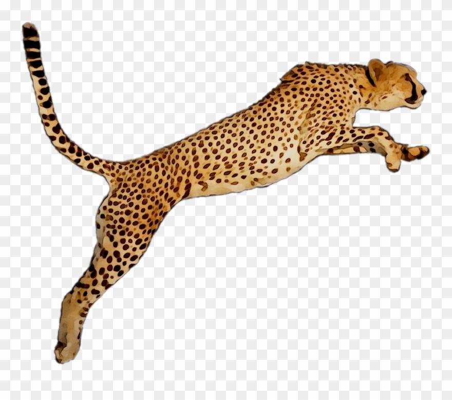 Portable Wallpaper Leopard Desktop Graphics Cheetah.