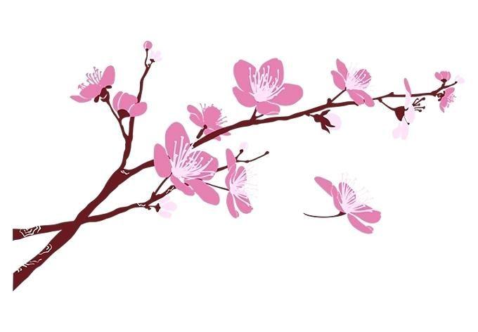 cherry blossom branch cherry blossom branch eso price cherry blossom.