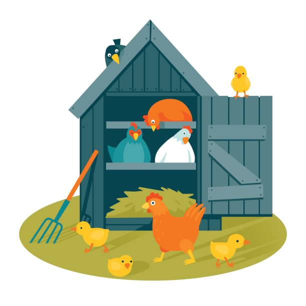 Best Chicken Coop Illustrations, Royalty.