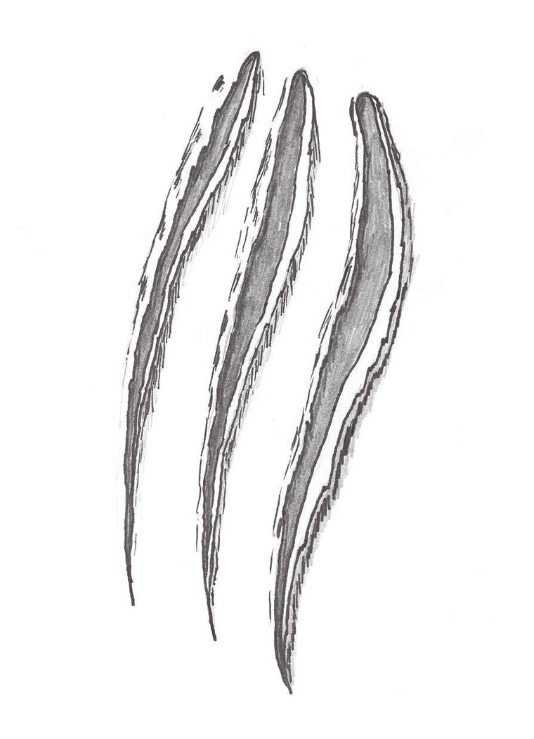 Claw Marks Clip Art N8 free image.