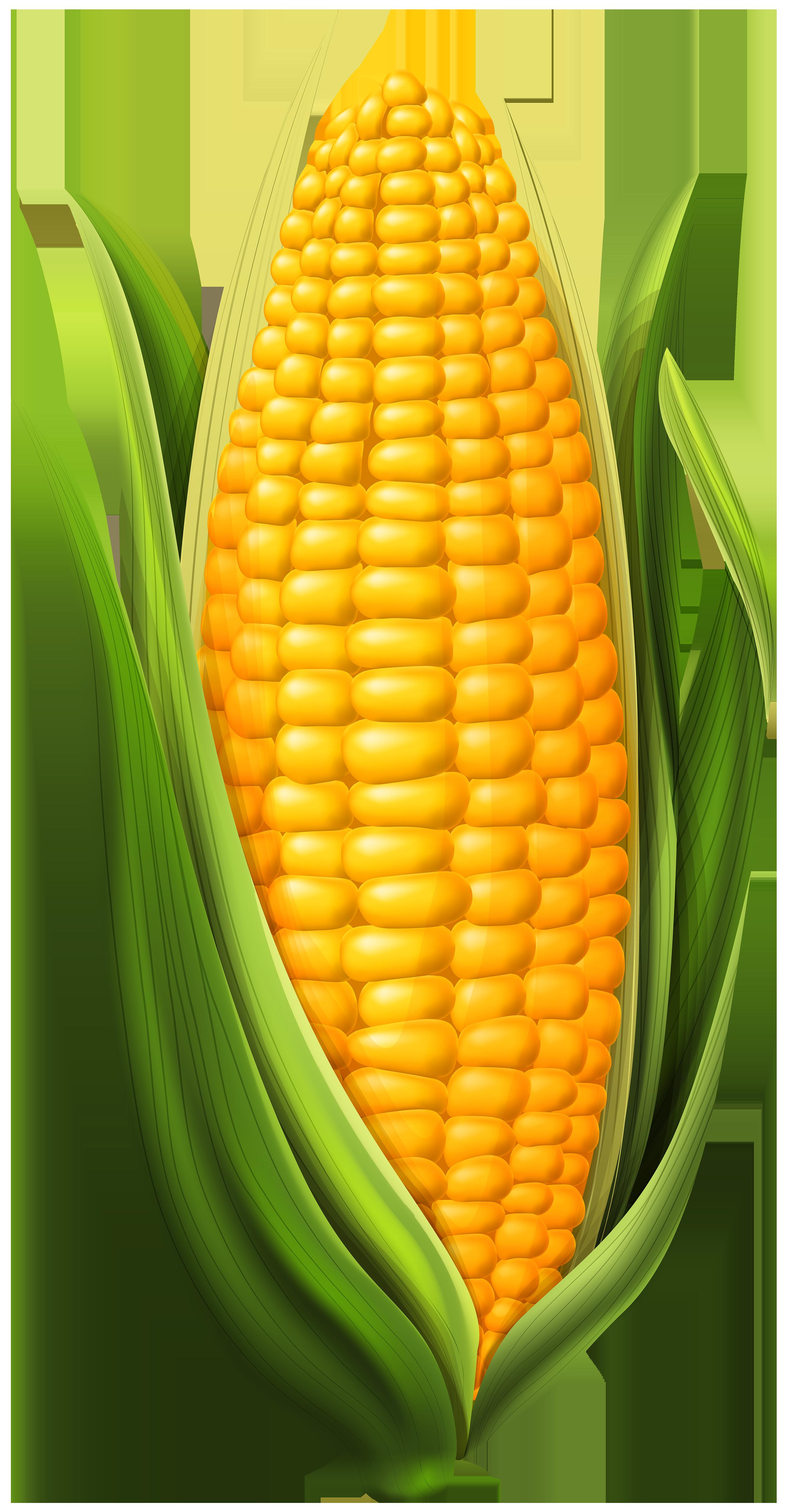 Corn PNG Clip Art Image.