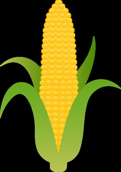 Large Husk of Golden Corn.