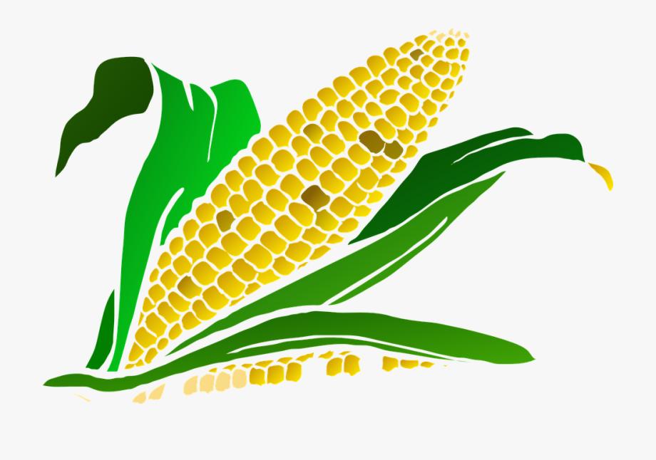 Corn Cob Png.