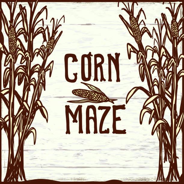 Corn Maze Illustrations, Royalty.