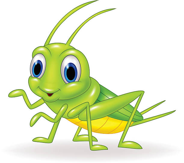 Best Cricket Insect Illustrations, Royalty.