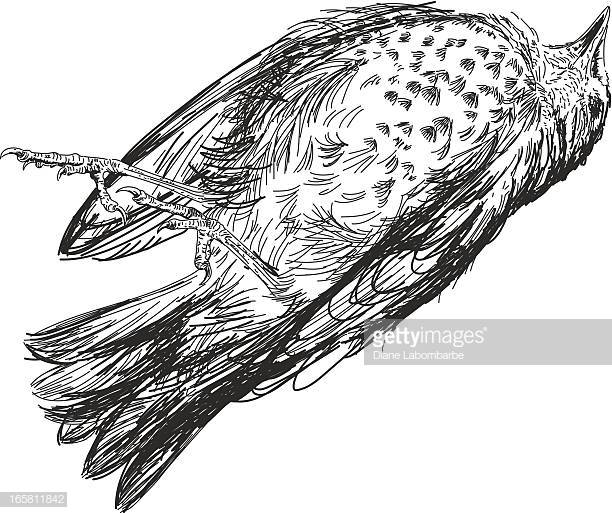 30 Top Dead Bird Stock Illustrations, Clip art, Cartoons, & Icons.