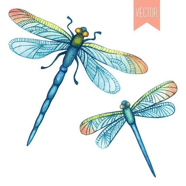 Best Dragonfly Illustrations, Royalty.