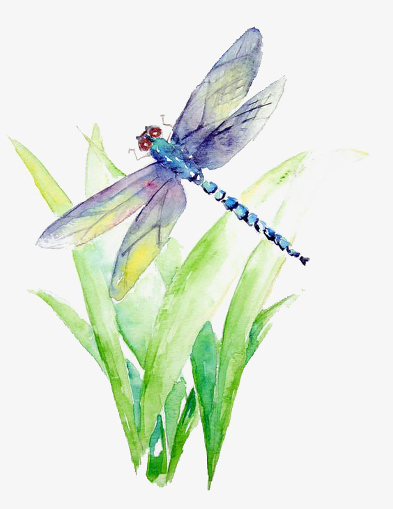 Watercolor Dragonfly, Watercolor Clipart, Dragonfly Clipart, Insect.