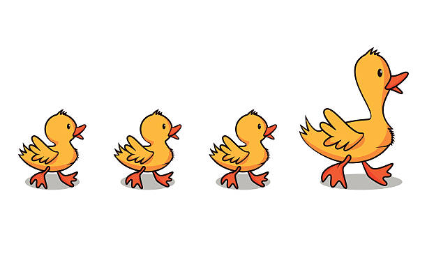 Best Ducks In A Row Illustrations, Royalty.