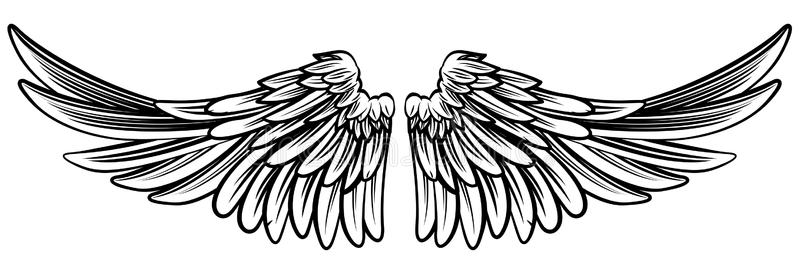 Eagle Wings Stock Illustrations.