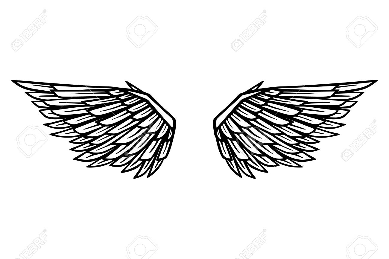 Hand drawn eagle wings illustration isolated on white background.