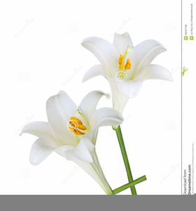 Clipart Easter Lily.