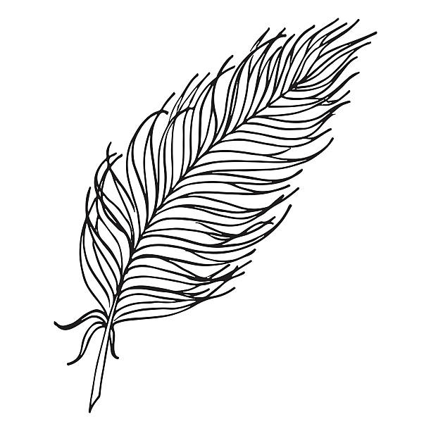 Best Single Feather Illustrations, Royalty.