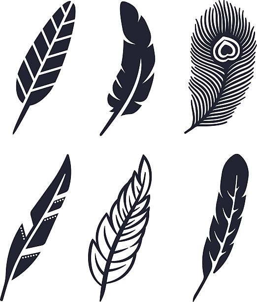 Best Peacock Feather Illustrations, Royalty.