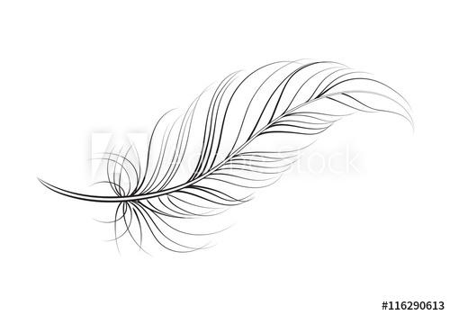 clip art feather, vector.