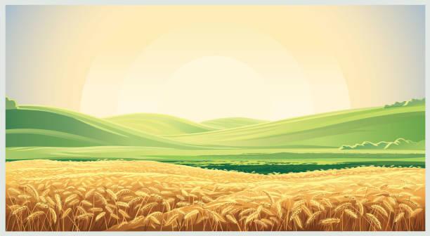 Best Wheat Field Illustrations, Royalty.