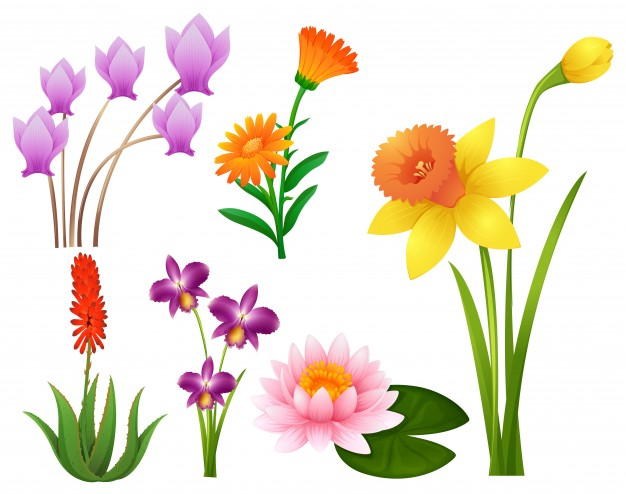Flowers flower clipart vectors photos and psd files free download.