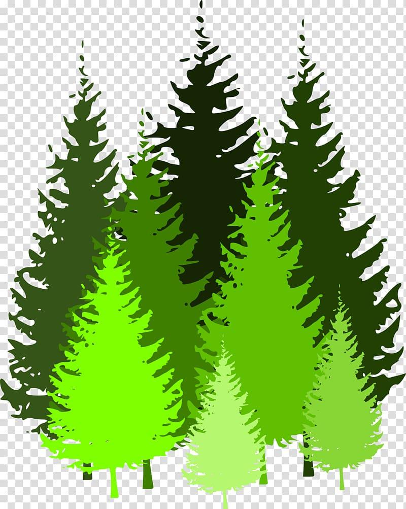 Forest Pine , fir.
