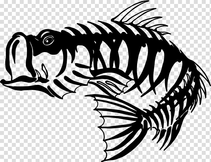 Bass fishing Skeleton Drawing, Skeleton transparent background PNG.