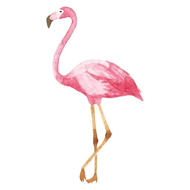 Best Flamingo Illustrations, Royalty.