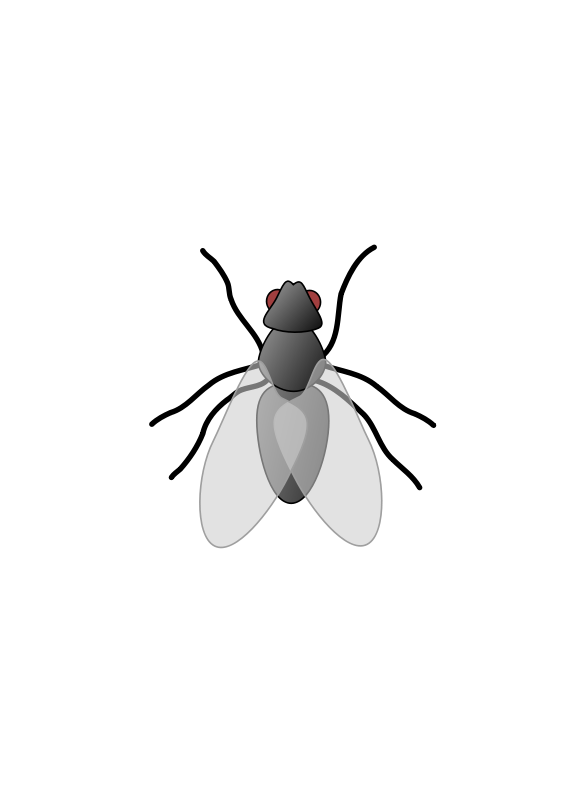 Free Clipart: Fly 01.