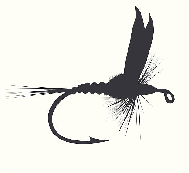 Best Fly Fishing Illustrations, Royalty.