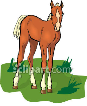 Chestnut Colored Foal.