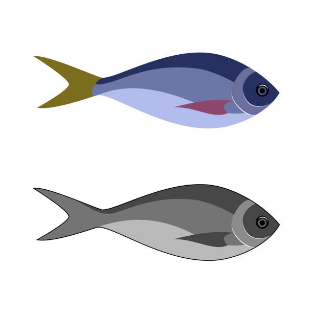 Best Fish Food Illustrations, Royalty.