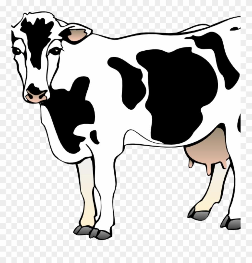 Free Cow Clipart Cow Clipart Cow 11 Clip Art Vector.