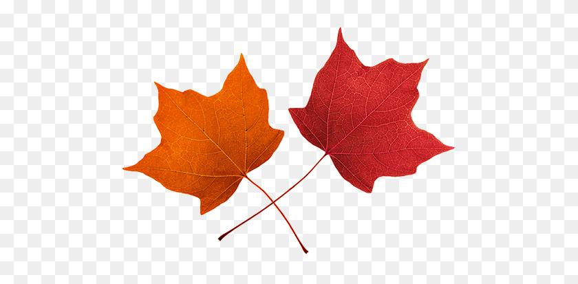 Best Maple Leaf Clip Art.
