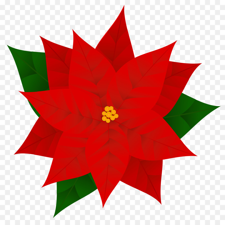 Christmas Poinsettia Cliparttransparent png image & clipart free.