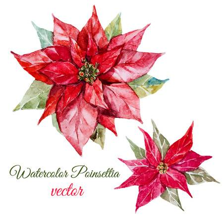 10,012 Poinsettia Stock Vector Illustration And Royalty Free.