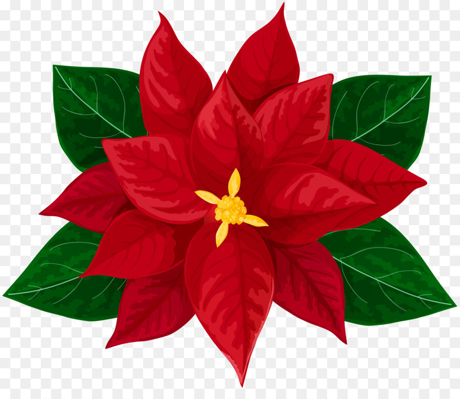 Poinsettia Drawing Clip Art Others Png Download 6000 5083 Free Best.