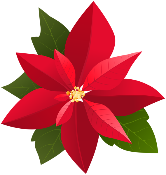 Poinsettia Flower Drawing.