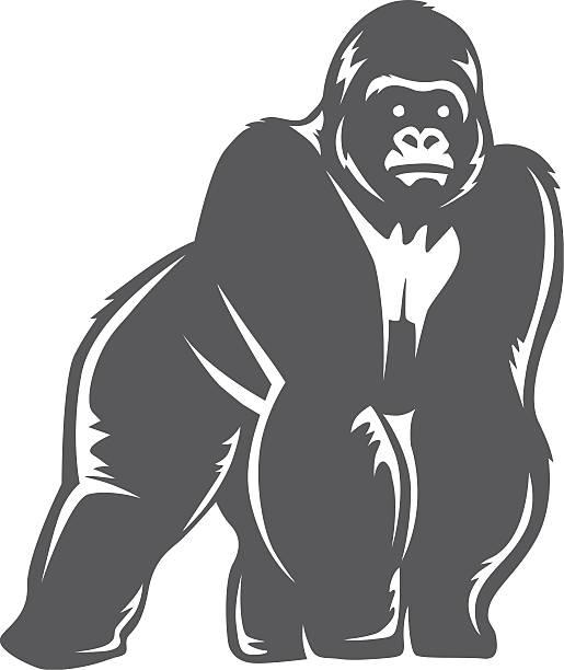 Best Gorilla Illustrations, Royalty.