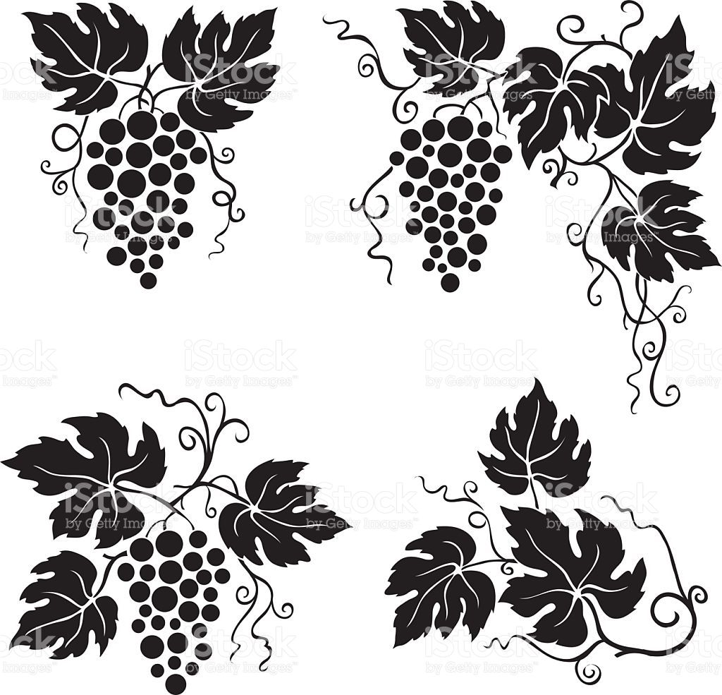 Image result for grape leaves clipart.