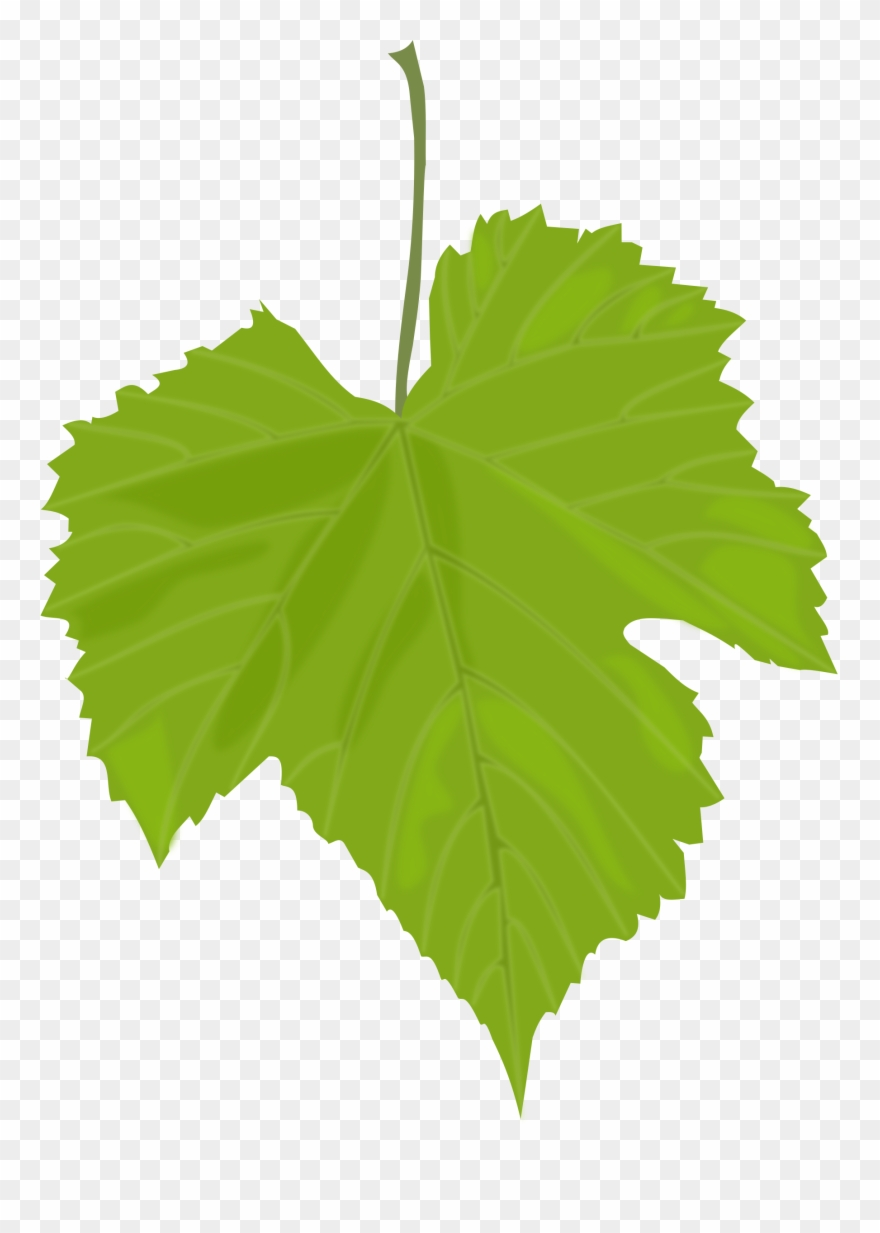 Leaves Clipart Birch Leaf.