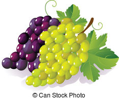 Grape Clipart and Stock Illustrations. 49,367 Grape vector EPS.