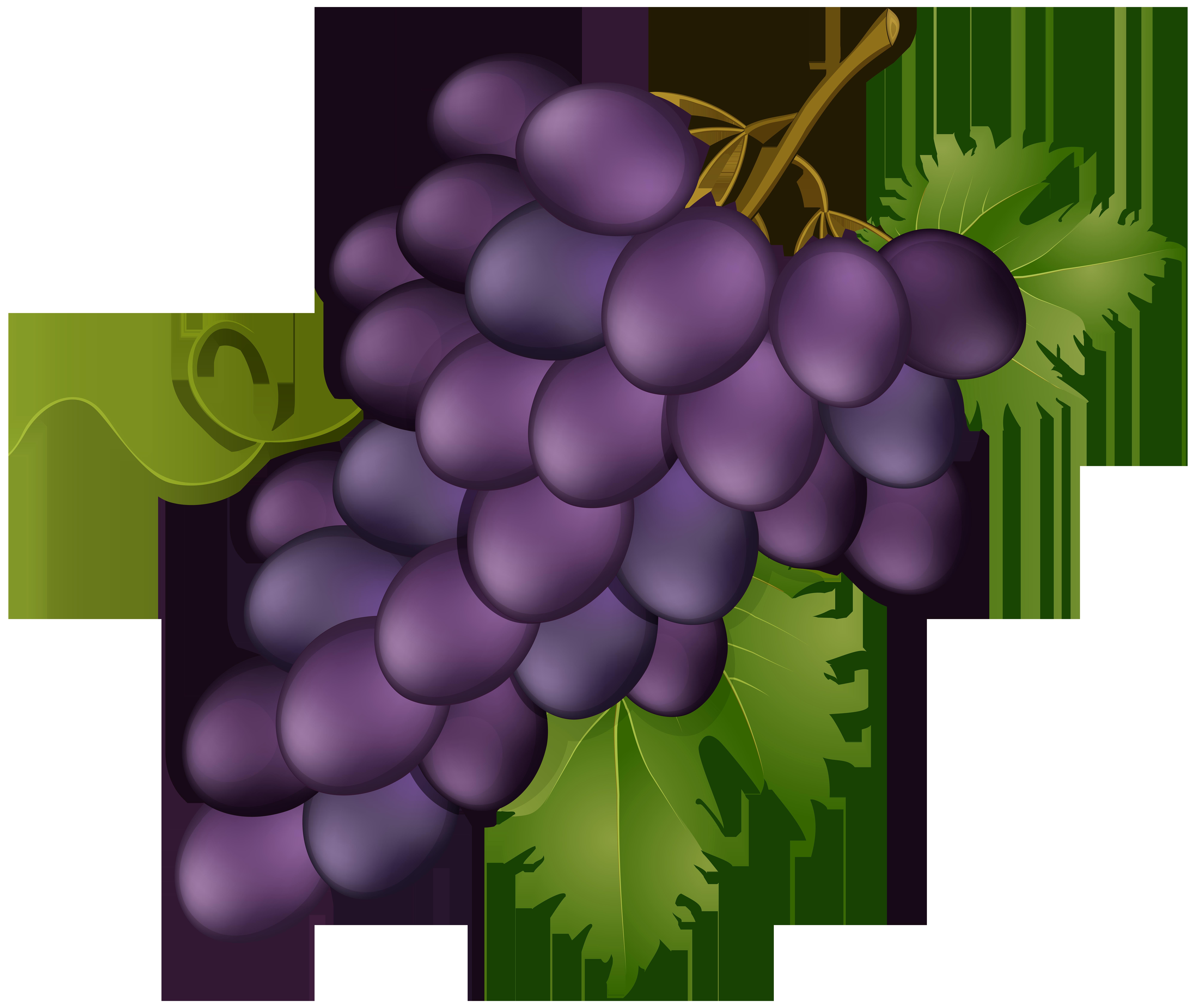 Grape Pink Transparent PNG Clip Art Image.