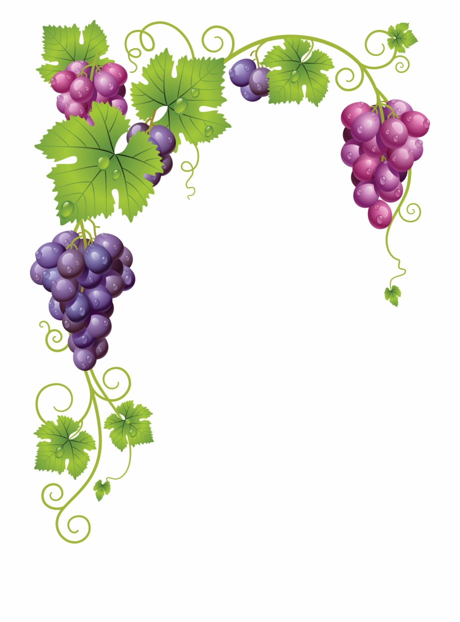 Transparent Grapes Vine Clipart.
