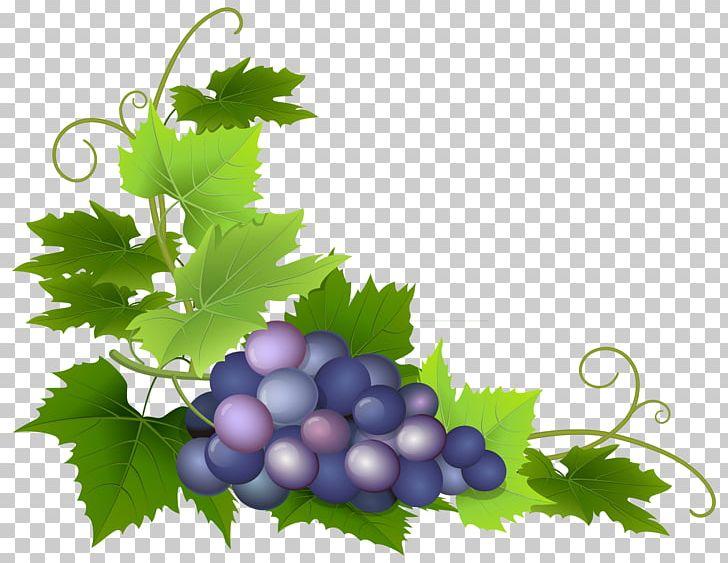 Common Grape Vine Grape Pie PNG, Clipart, Berry, Clipart, Clip Art.