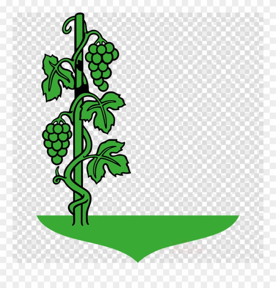 Cartoon Vine Clipart Common Grape Vine Clip Art.