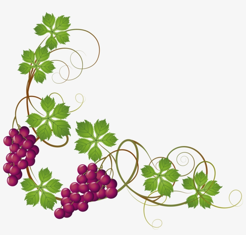 Grape Vine At Getdrawings Com Free For.