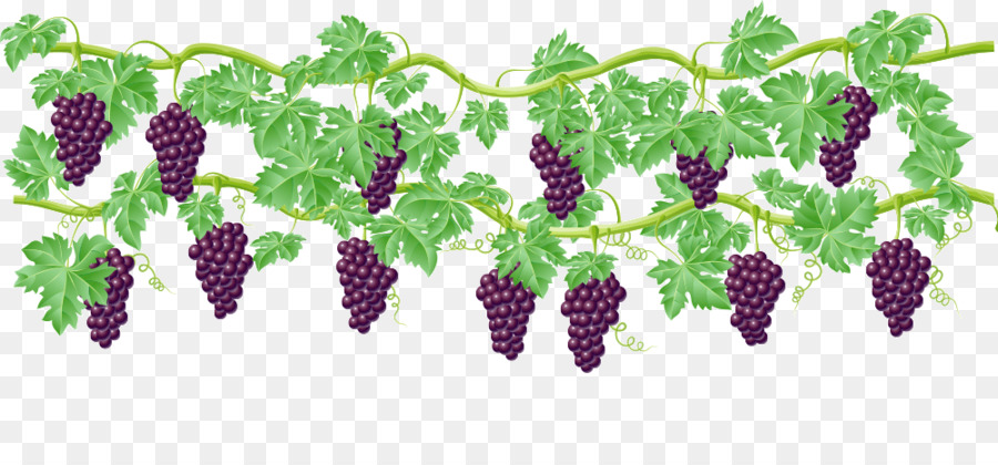 Grape vines clipart 5 » Clipart Station.