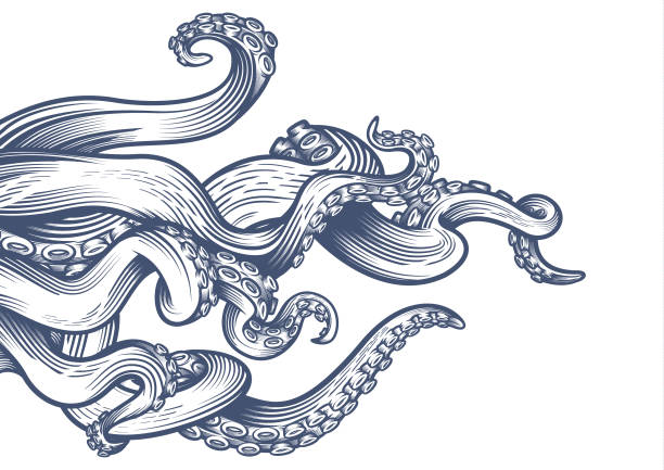 Best Octopus Illustrations, Royalty.